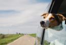 Come preparare l'auto per un lungo viaggio