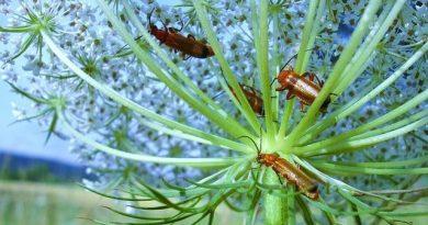 Come eliminare gli scarafaggi dagli scarichi?