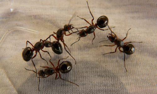 Come allontanare gli scarafaggi in modo naturale: la guida ...